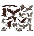birds prey predatory eagle and hawk falcons vector image
