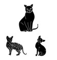 breeds of cats black icons in set collection for vector image