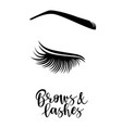 brows and lashes vector image vector image