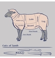 Lamb Cuts Diagram vector image