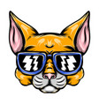 naughty yellow cat with blue sunglasses vector image