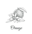 orange sketch with flower orange vector image vector image