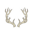 deer antlers drawing isolated on white background vector image