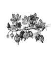 hand drawn gooseberry branch vector image vector image