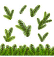 fir tree isolated isolated white background vector image vector image