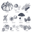 autumn fruits hand drawn sketches vector image
