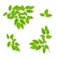 green leaves of a tree vector image