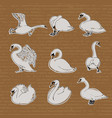hand drawn swans in different poses for your vector image
