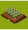 Vegetable Garden Box with Potatoes Set 12 vector image vector image