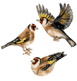 goldfinches vector image