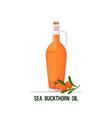 fresh sea buckthorn oil glass bottle branch vector image