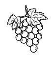 grapes fruit icon design sign vector image