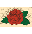rose tattoo on old background with blots vector image