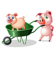 Two pigs with a green cart vector image vector image