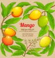 mango branches frame on color background vector image
