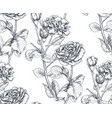 seamless pattern with hand drawn rose vector image