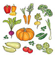 vegetable set drawn watercolor sign food vector image