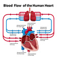 Chart showing blood flow of human heart vector image vector image