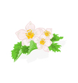 Flowers strawberries with leaves vector image