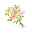 dog roses flowers on white vector image vector image