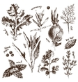 hand drawn herbs and spices set vector image vector image