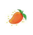 Juicy Mango Fruit Watercolor vector image