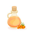 bottle of sea buckthorn oil and heap of orange vector image vector image