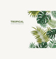 summer paradise background with exotic palm tree vector image vector image