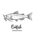 catfish vector image
