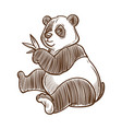 panda bear with bamboo leaves isolated sketch vector image