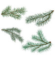 pine and spruce branches vector image vector image