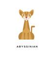 purebred abyssinian cat elegant short-haired vector image vector image