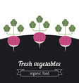 Radish vegetables vector image vector image