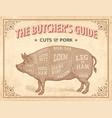 cuts pork vector image