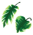 set of tropical palm leaves isolated on white vector image