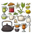 set tea color vintage engraving isolated vector image vector image