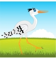 Stork on glade vector image vector image