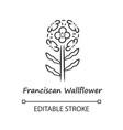 franciscan wallflower linear icon garden vector image vector image
