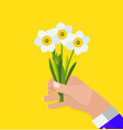 hand of a man holds spring narcissus flowers vector image vector image