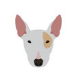 isolated bull terrier avatar vector image vector image