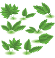 Spring Leaves vector image vector image