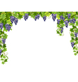 blue grape floral frame vector image vector image
