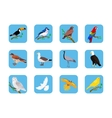 Collection of Various Birds Flat Design vector image vector image