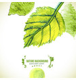 green watercolor leaves background vector image vector image