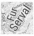 Serval Word Cloud Concept vector image vector image