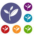tea leaf sprout icons set vector image vector image