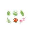 tropical plants and flowers collection design vector image vector image