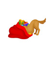 dog looking for his holiday present bright red vector image vector image