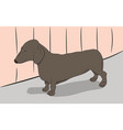 a dachshund dog is in the room vector image