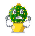 angry mammillaria compressa cactus isolated on the vector image vector image